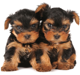 Names  Puppies on Dognamesplace Com   Cute Dog Names